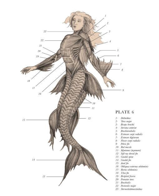 anatomical_illustrations_mythological_creatures_2
