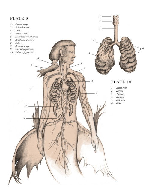 anatomical_illustrations_mythological_creatures_4