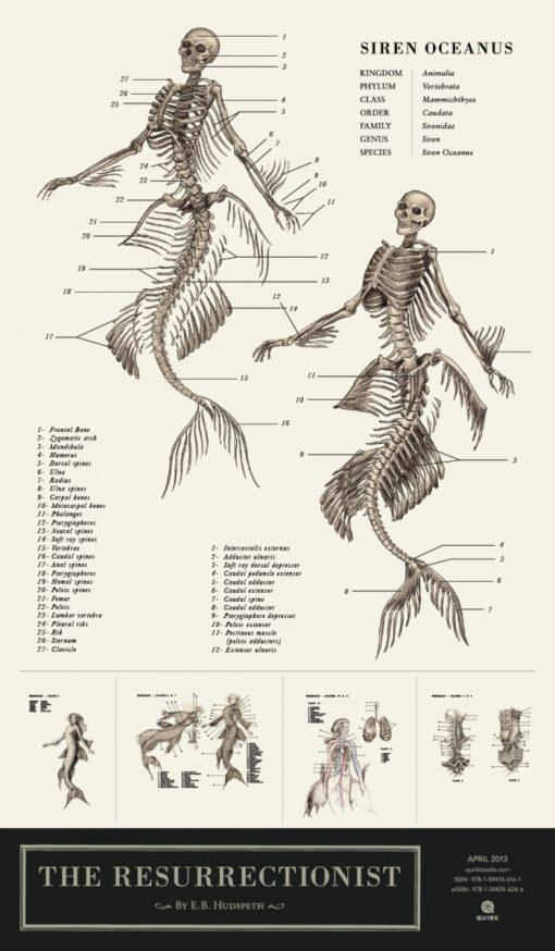 anatomical_illustrations_mythological_creatures_5