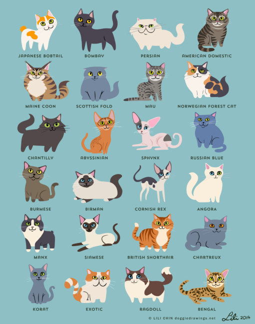 cats_of_the_world