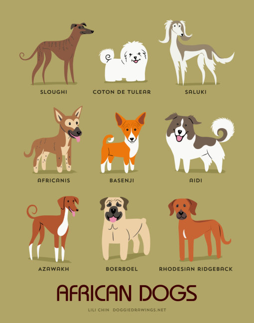 dogs_of_the_world_african