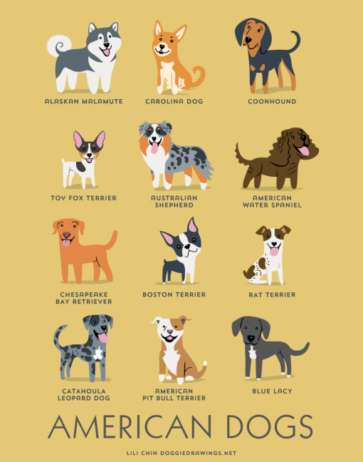 dogs_of_the_world_american