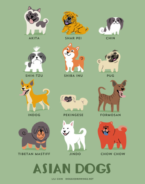 dogs_of_the_world_asian