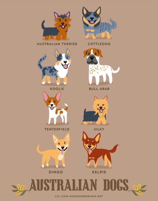 dogs_of_the_world_australian