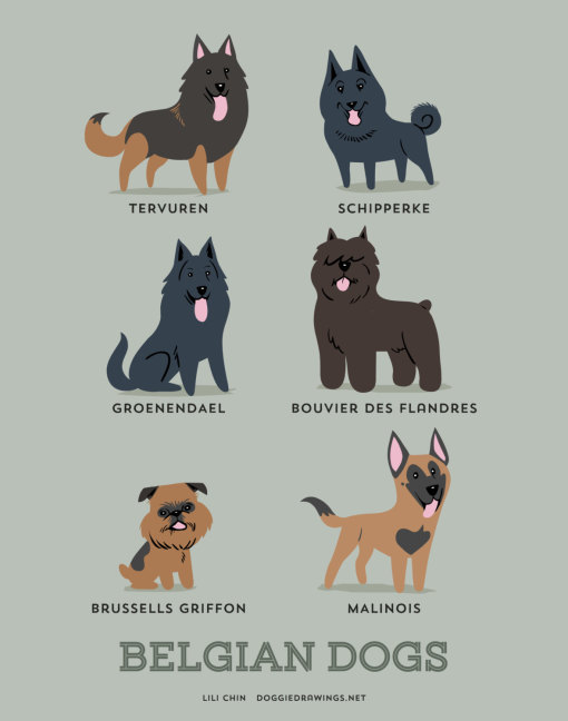 dogs_of_the_world_belgian
