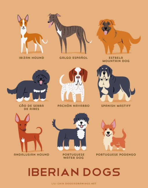 dogs_of_the_world_iberian