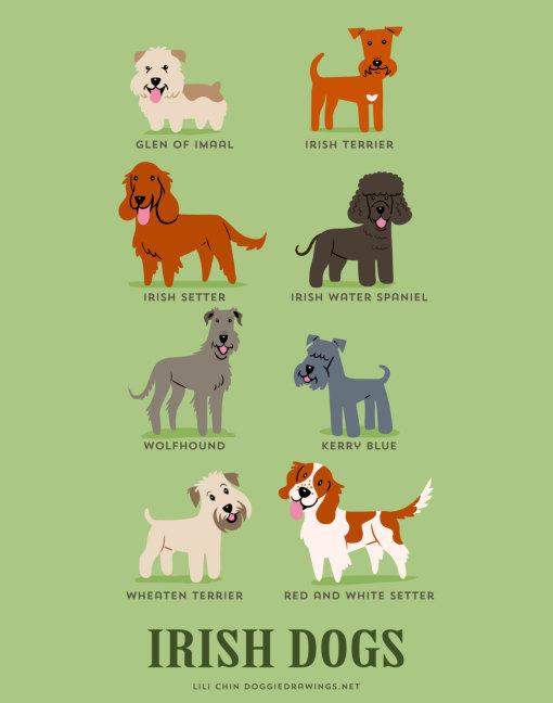 dogs_of_the_world_irish