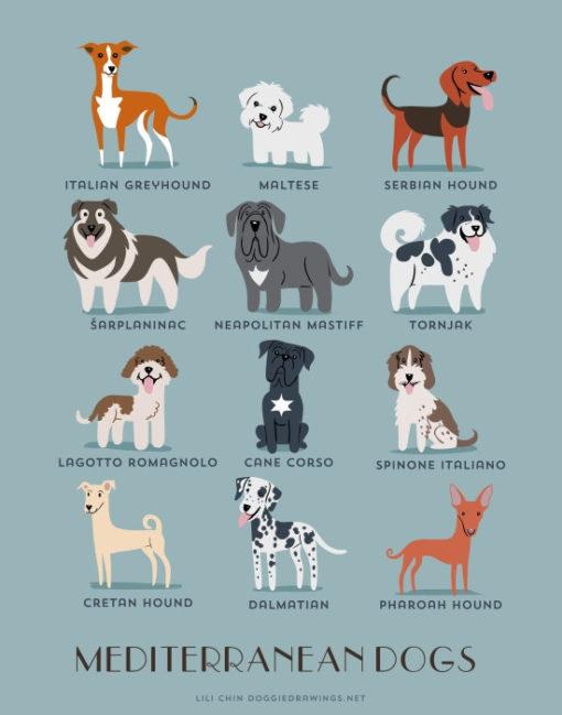 dogs_of_the_world_mediterranean