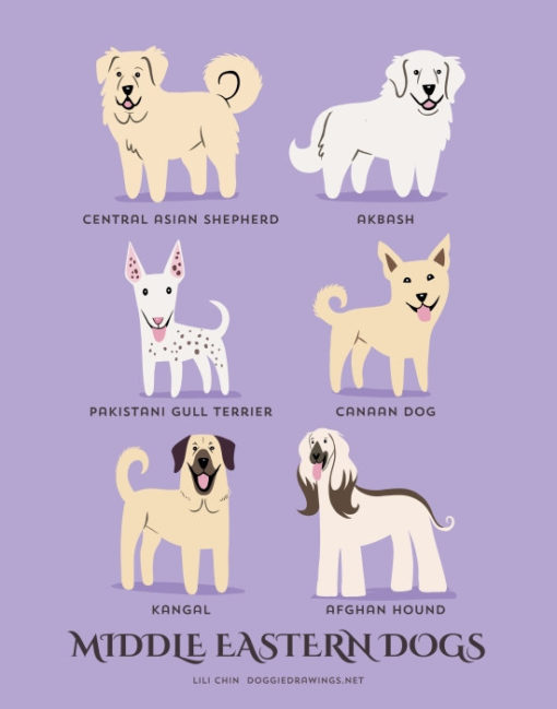 dogs_of_the_world_middle_eastern