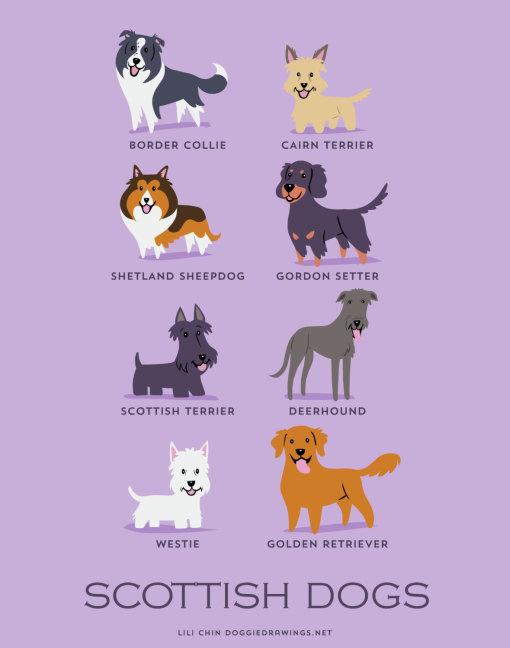 dogs_of_the_world_scottish