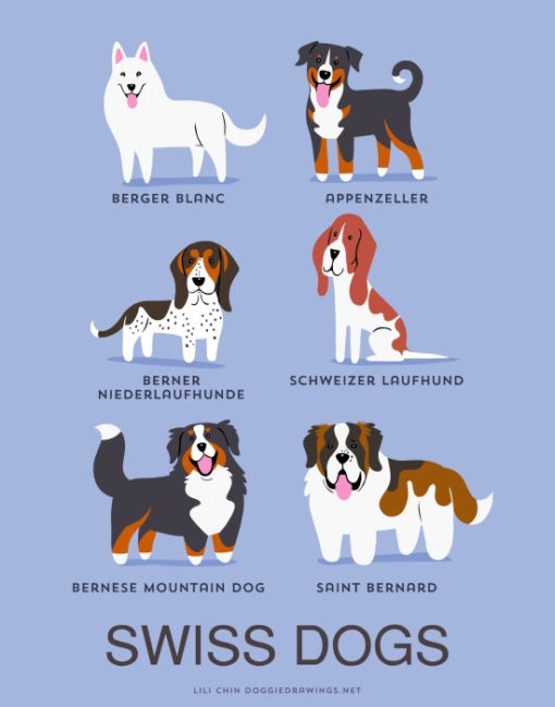 dogs_of_the_world_swiss