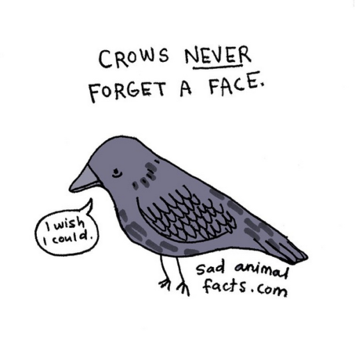 sad_animal_facts_crows