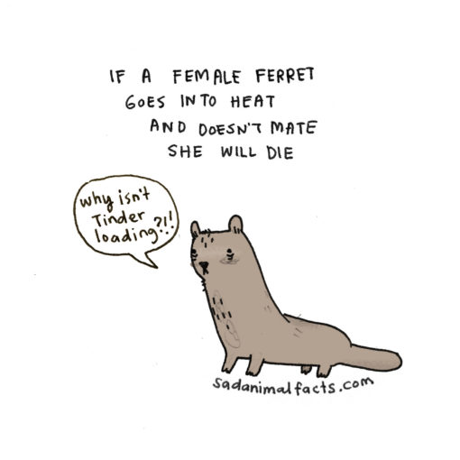 sad_animal_facts_ferrets