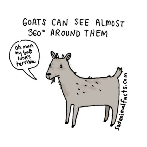 sad_animal_facts_goats