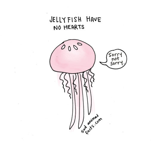 sad_animal_facts_jellyfish