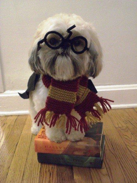Harry Pupper