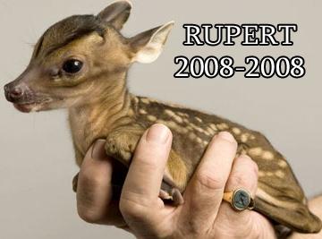 RIP Rupert