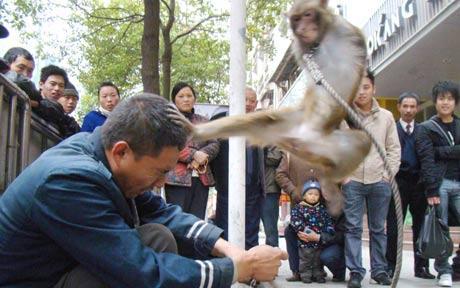 Evil Taekwondo Monkeys