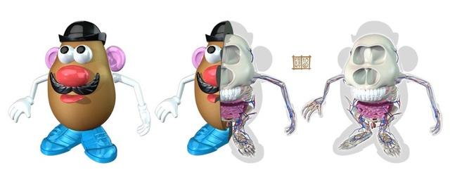 The Anatomy of Mr. Potatohead